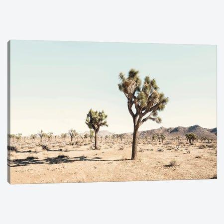 Joshua Tree Desert Canvas Print #SSE99} by Sisi & Seb Canvas Wall Art