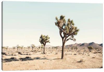 Joshua Tree Desert Canvas Art Print