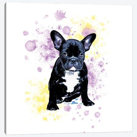 Boston Terrier Purple Yellow Splash Canvas Print #SSI148} by Seven Sirens Studios Art Print