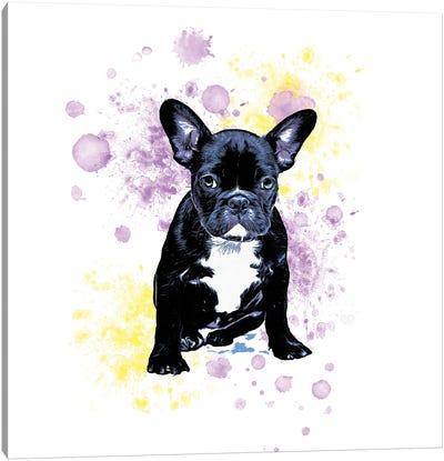 Boston Terrier Purple Yellow Splash Canvas Art Print