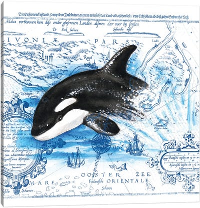 Breaching Baby Orca Vintage Map Canvas Art Print