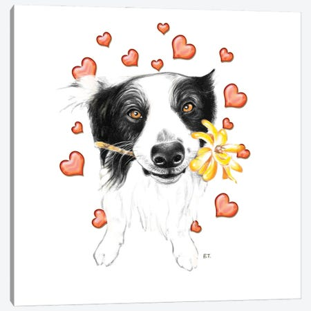 Border Collie And Hearts Canvas Print #SSI151} by Seven Sirens Studios Canvas Wall Art