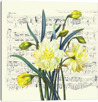 Daffodils Spring Music Shabby Chic Canvas Art Print