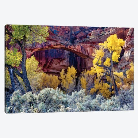 Autumn Foliage Below Escalante Natural Bridge, Grand Staircase-Escalante National Monument, Utah, USA Canvas Print #SST6} by Scott T. Smith Art Print