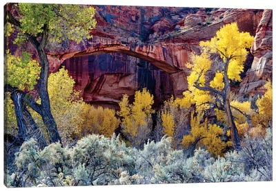 Autumn Foliage Below Escalante Natural Bridge, Grand Staircase-Escalante National Monument, Utah, USA Canvas Art Print