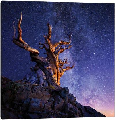 The Ancient Tree Canvas Art Print