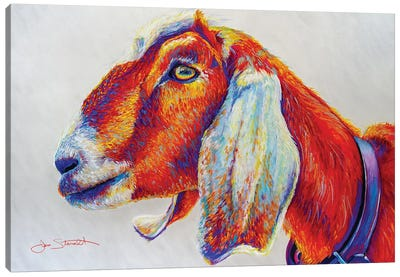 Sandberg Goat Canvas Art Print
