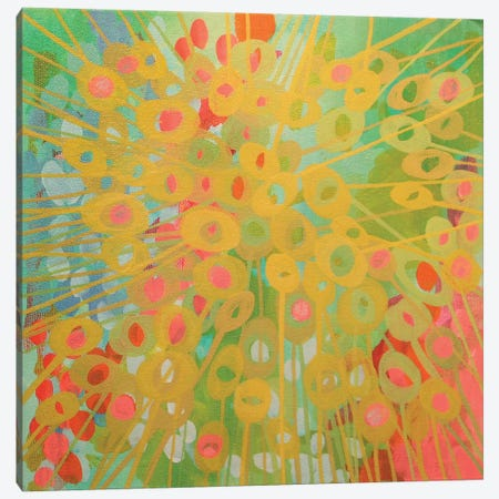 Sundrops II Canvas Print #STC72} by Stephanie Corfee Art Print