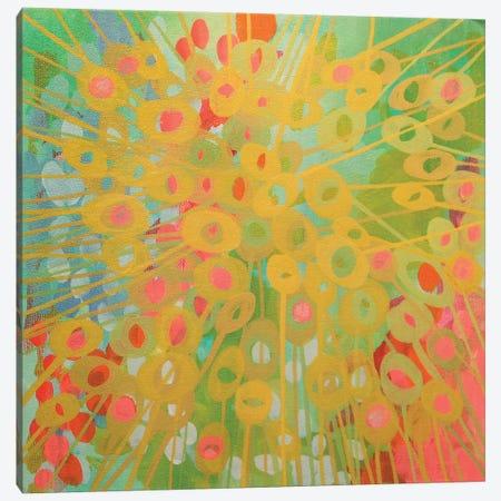 Sundrops II Canvas Print #STC72} by Stephanie Corfee Art Print