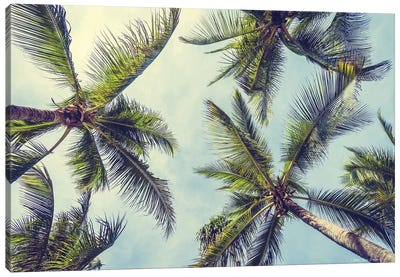 Palms in the Sky Canvas Art Print