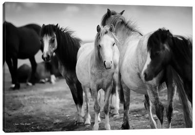 Black & White Horses Canvas Art Print