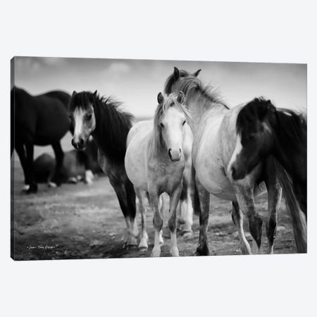 Black & White Horses Canvas Print #STD137} by Seven Trees Design Canvas Wall Art
