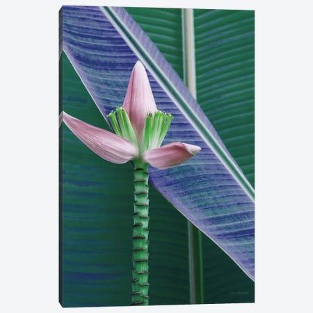 Banana Flower Canvas Print #STD157} by Seven Trees Design Canvas Art