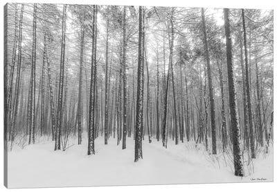 Let It Snow Forest Canvas Art Print