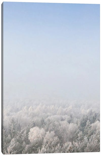 Snow Forest From The Sky Canvas Art Print