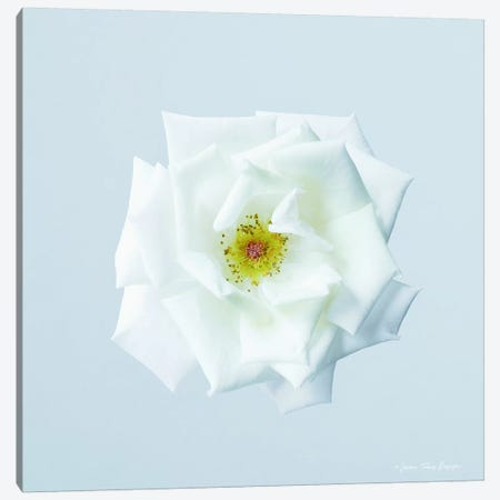 Rose I Canvas Print #STD50} by Seven Trees Design Canvas Wall Art