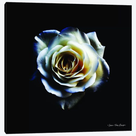 Rose II Canvas Print #STD51} by Seven Trees Design Canvas Wall Art