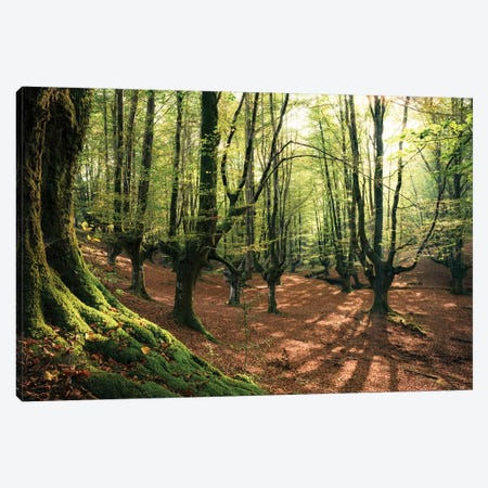 Light In The Forest Canvas Print #STF100} by Stefan Hefele Art Print