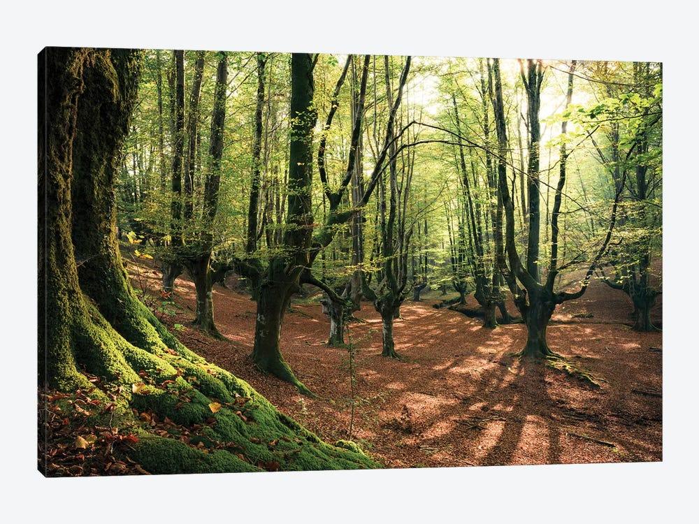 Light In The Forest by Stefan Hefele 1-piece Canvas Artwork
