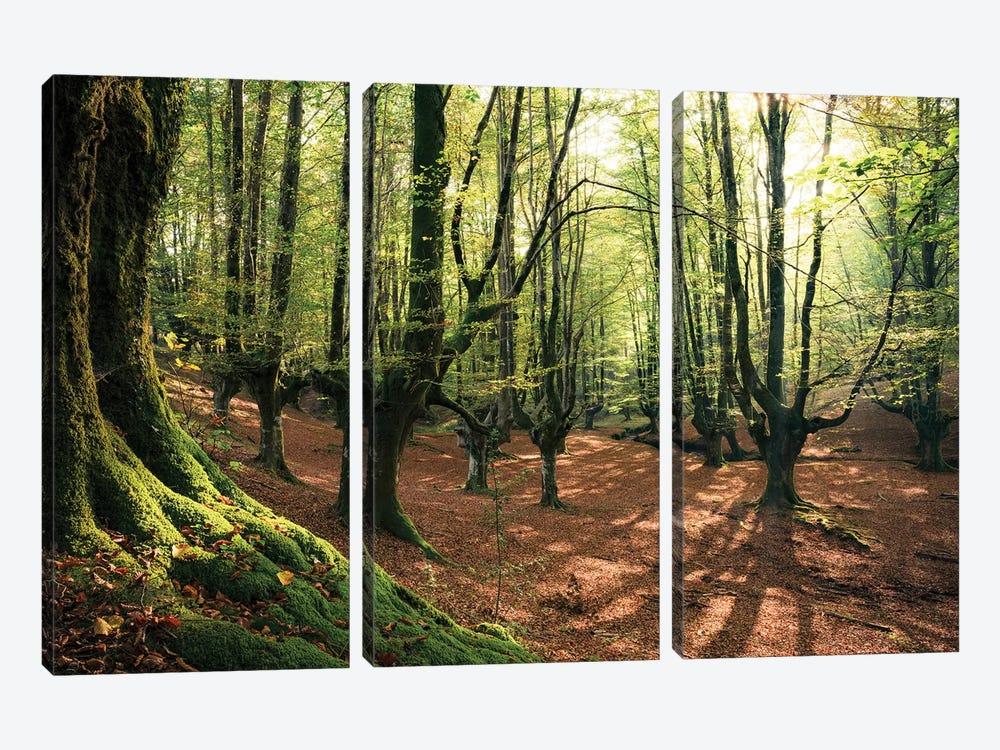 Light In The Forest by Stefan Hefele 3-piece Canvas Wall Art