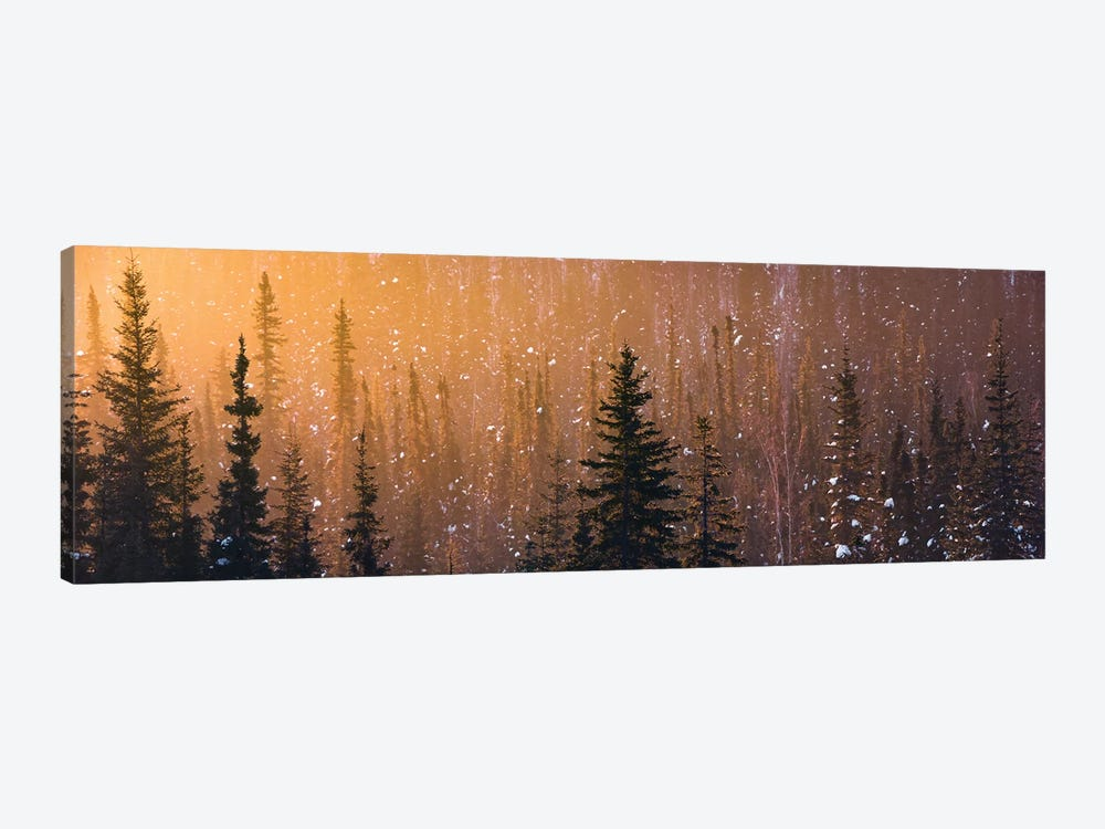 Light In The Woods by Stefan Hefele 1-piece Canvas Print
