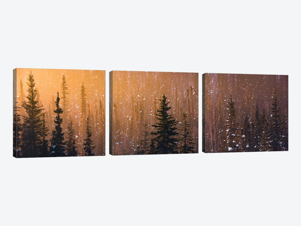 Light In The Woods by Stefan Hefele 3-piece Art Print
