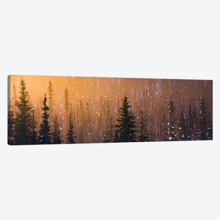 Light In The Woods Canvas Print #STF101} by Stefan Hefele Art Print