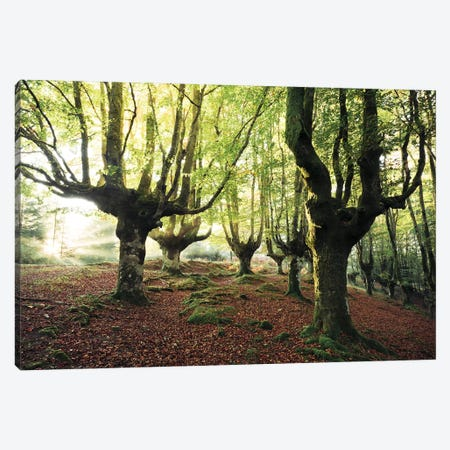 Majestic Trees Canvas Print #STF108} by Stefan Hefele Art Print