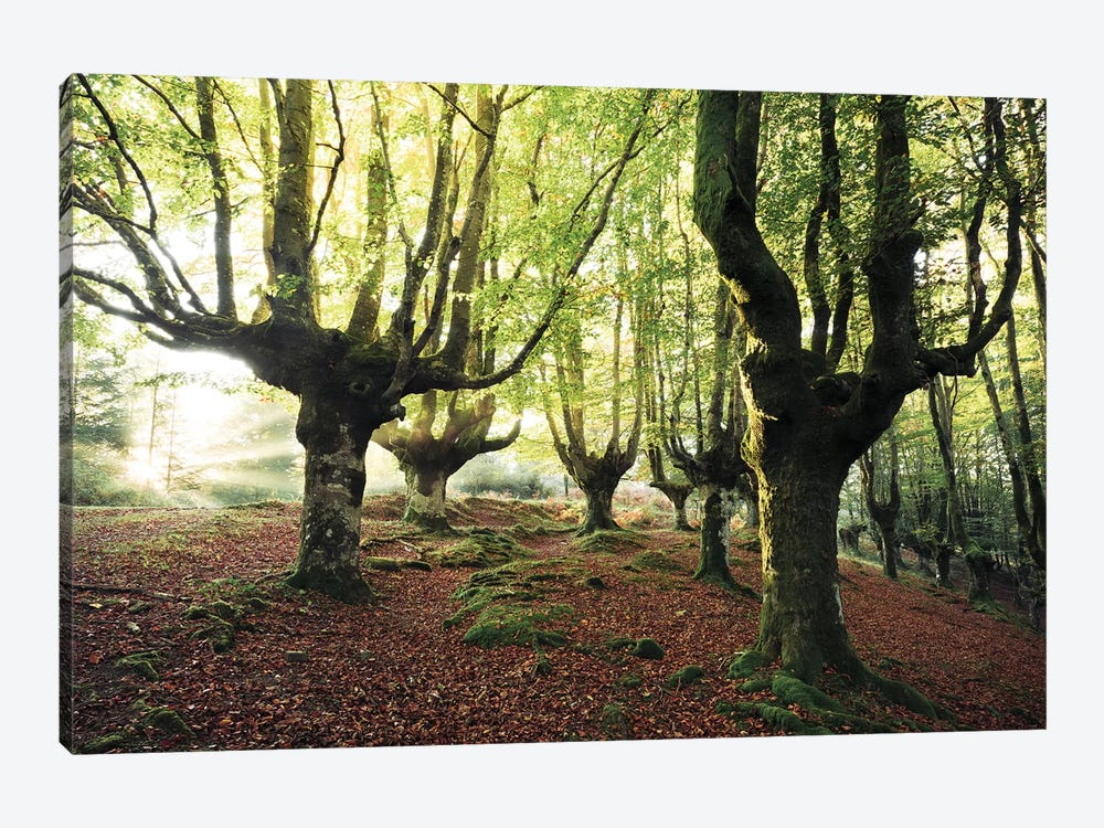 Majestic Trees by Stefan Hefele 1-piece Canvas Wall Art