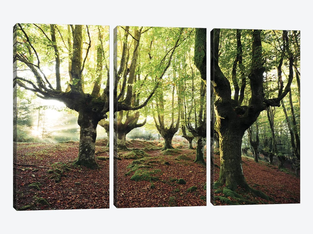 Majestic Trees by Stefan Hefele 3-piece Canvas Wall Art
