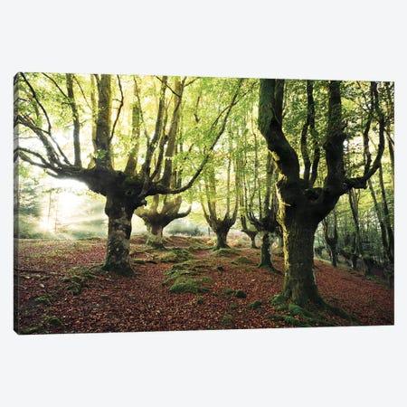 Majestic Trees Canvas Print #STF108} by Stefan Hefele Art Print