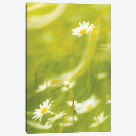 Margeritenwischer Canvas Print #STF109} by Stefan Hefele Art Print