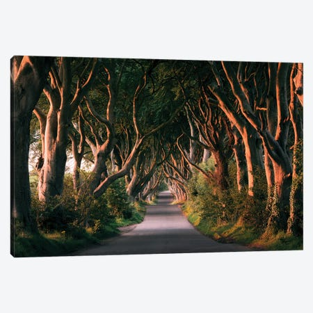 Nature's Lingerie - Dark Hedges Canvas Print #STF117} by Stefan Hefele Canvas Print