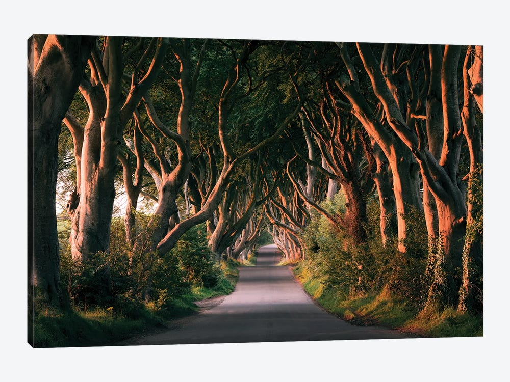 Nature's Lingerie - Dark Hedges by Stefan Hefele 1-piece Canvas Wall Art