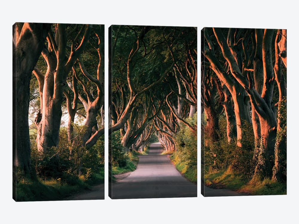 Nature's Lingerie - Dark Hedges by Stefan Hefele 3-piece Canvas Wall Art