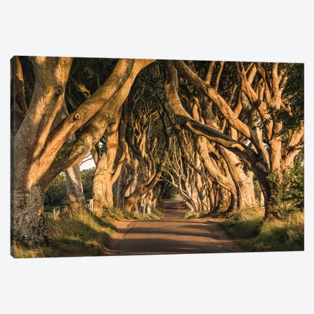 Old Avenue Canvas Print #STF118} by Stefan Hefele Canvas Artwork