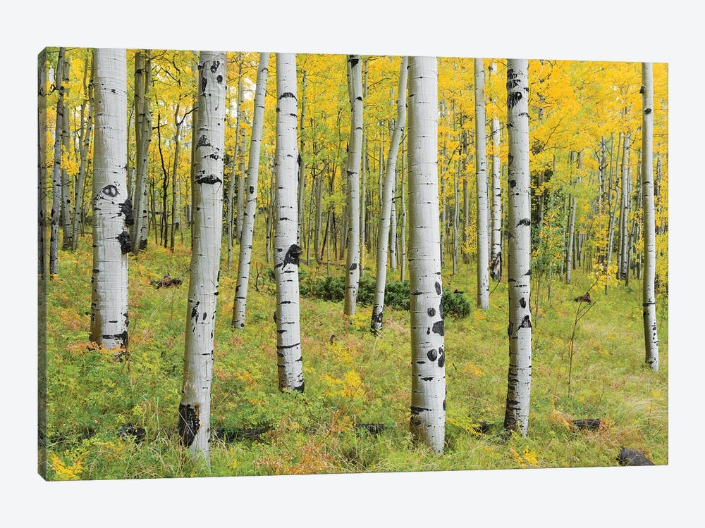 Orange Forest, Germany by Stefan Hefele 1-piece Canvas Wall Art