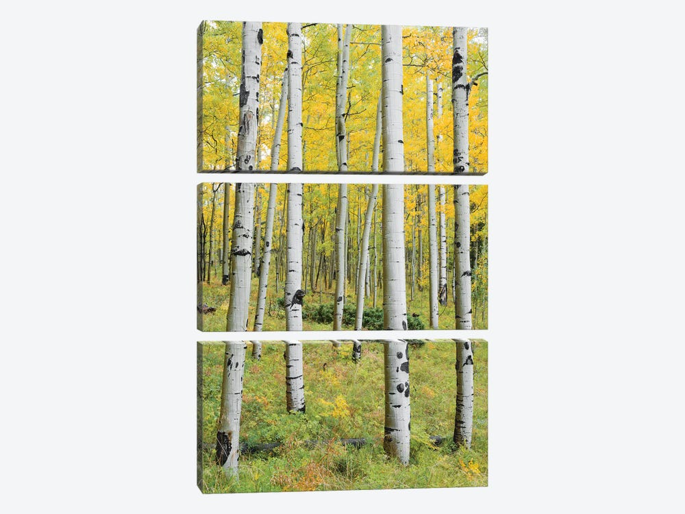Orange Forest, Germany - Vertical 3-piece Canvas Art Print