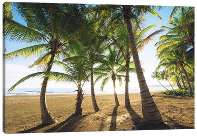 Palm Island, Puerto Rico Canvas Art Print