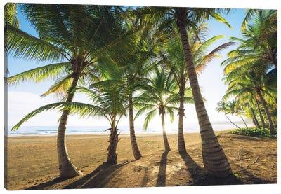 Palm Island, Puerto Rico Canvas Art Print