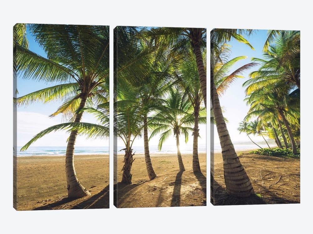 Palm Island, Puerto Rico by Stefan Hefele 3-piece Canvas Art Print