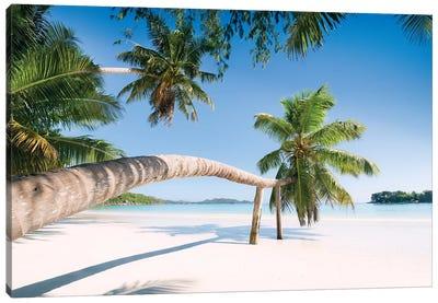Palm, Seychelles Canvas Art Print