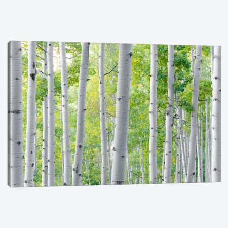 Aspen Canvas Print #STF12} by Stefan Hefele Canvas Artwork
