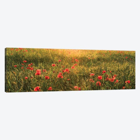 Poppy World I Canvas Print #STF131} by Stefan Hefele Canvas Art