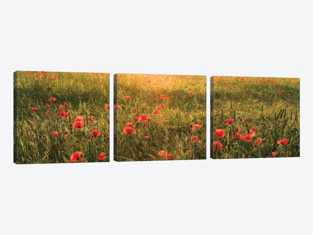 Poppy World I by Stefan Hefele 3-piece Canvas Wall Art