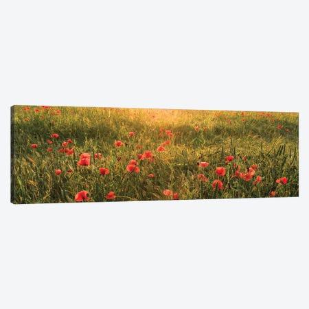 Poppy World I Canvas Print #STF131} by Stefan Hefele Canvas Art