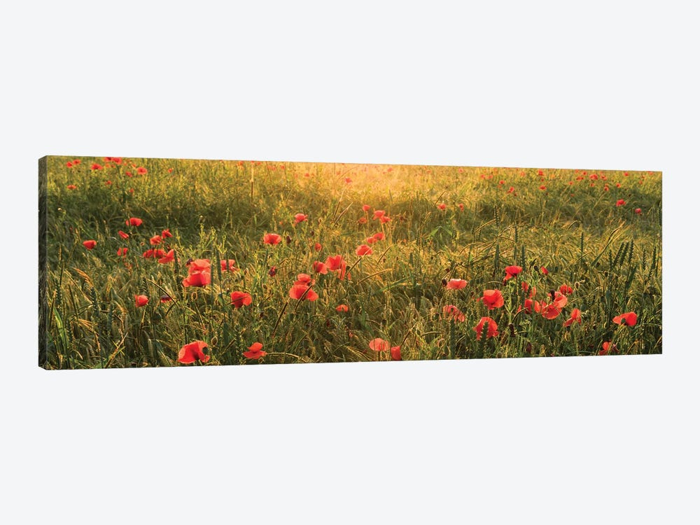 Poppy World I by Stefan Hefele 1-piece Canvas Artwork