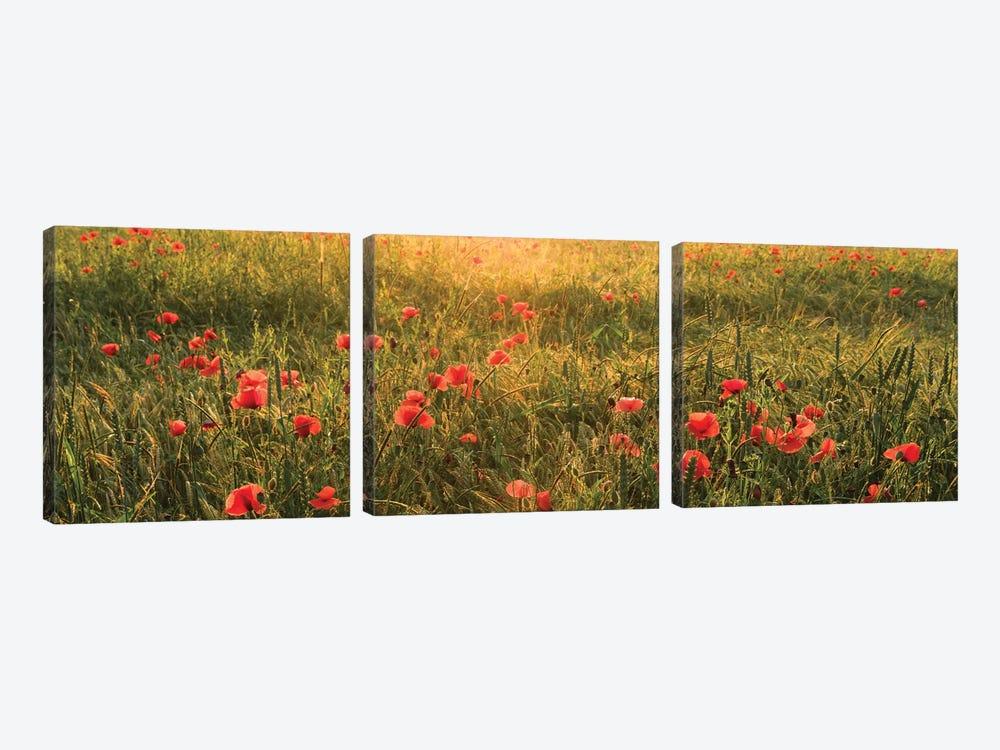 Poppy World I by Stefan Hefele 3-piece Canvas Wall Art