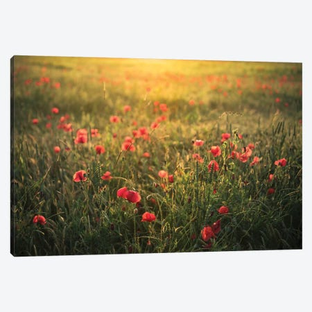 Poppy World II Canvas Print #STF132} by Stefan Hefele Canvas Wall Art
