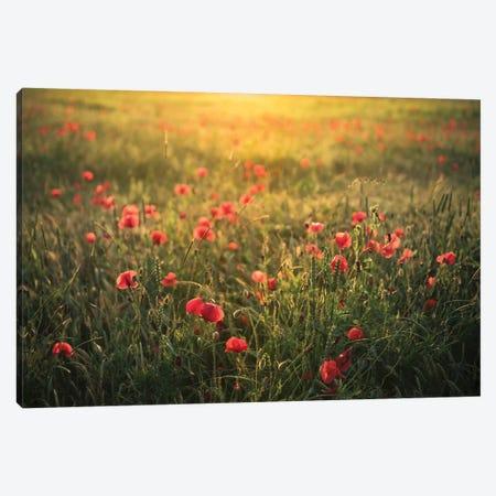 Poppy World II Canvas Print #STF132} by Stefan Hefele Canvas Wall Art